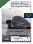 Ingestion residuos tortuga verde 2015