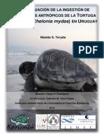 Ingestión residuos tortuga verde 2015