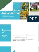 Reprodução nas Angiospermas.pptx