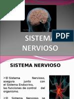 Diapositivas Del Sistema Nervioso
