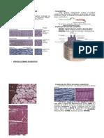 Histologia - Tecido Muscular
