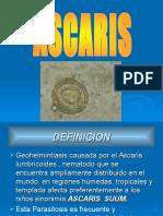 Ascaris Lumbricoide