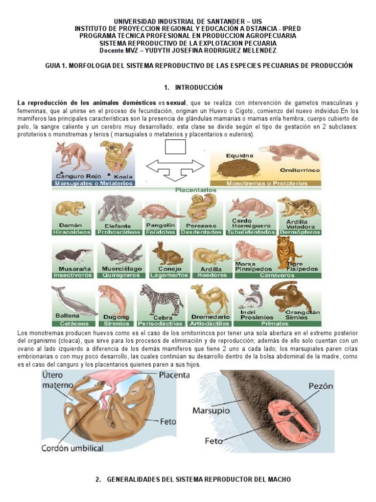 Guia 1 Morfologia Del fdgReproductivo