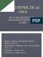 APARATO REPRODUCTOR DE LA VACA 2.pptx