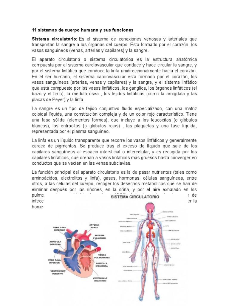 11 sistemas de cuerpo humano y sus funciones.docx