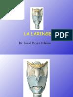 Cuello Laringe
