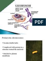 Chromosome 2015