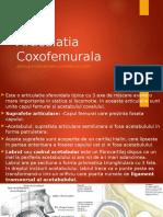 Articulatia Coxofemurala