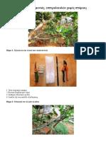 Πολλαπλασιασμός λεμονιάς και εσπεριδοειδών χωρίς σπόρους