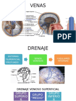 circulación venosa cerebral