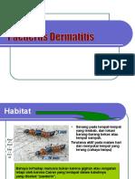 Paederus+Dermatitis