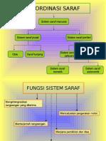 Sistem Saraf bab2