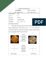 petrografi lap3
