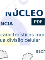 acidosnucleicos-nucleo.ppt