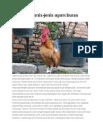 Mengenal Jenis Ayam Buras