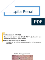 Papila Renal