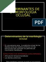 determinantesdelamorfologiaoclusal-090511140232-phpapp02