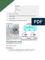 Bacterias Del Acido Acetico