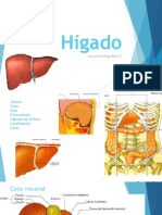 Hígado (Anatomía)