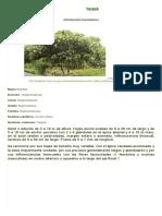 Targuá _ Plantas Con Actividad Antibacterial y Cicatrizante