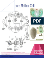 The Microspore Mother Cell
