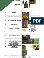 Inducción Metafórica Planta de Tomate