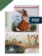 CASA IEPURASULUI.doc