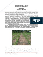 Budidaya Jagung(1).pdf