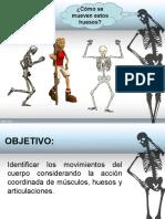 articulaciones del cuerpo