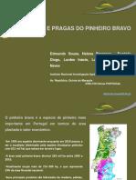 Pragas e doenças do pinheiro bravo