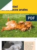 AV_25_Enfermedad de Los Sacos Anales