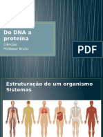 Do DNA a Proteína