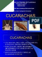 Cucarachas - parasitologia