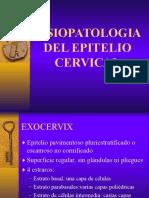 Fisiopatologia Epitelio Cervical