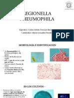 LEGIONELLA PHEUMOPHILA