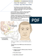 Yale- Cranial Nerve 7, Pg. 13