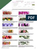 Flori Online, Specii de Flori _ 123Flori