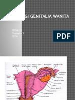 Bbdm Histologi Genitalia Wanita