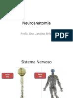 Neuroanatomia - Aula 4