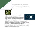 Al Reino Protista Pertenecen Organismos Como Las Algas y Los Protozoarios
