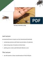 Lecture 13 - Enzyme Kinetics II
