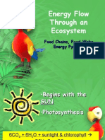 Energy Flow Through an Ecosystem Presentation