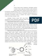 Patofisiologi Preeklampsia