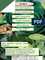 PPT penyakit kubis