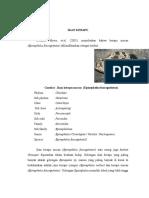 Klasifikasi Ikan Kerapu