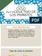 Ciclo Reproductivo de Los Primates