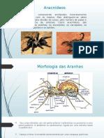 Parasitologia- Aranhas e Escorpioes