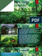 Padurea Amazoniană