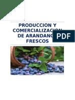 Produccion y Comercializacion de Arandanos Fresco 2