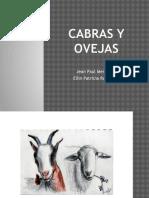 CABRAS Y OVEJAS.pptx